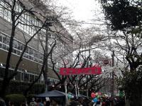 下高井戸桜まつり
