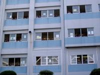 校舎の窓も特等席