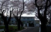 桜並木から校舎を望む