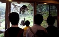 綱やハンモックで遊ぶチンパンジー