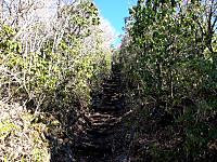 アセビに囲まれる道