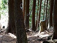 コースの印がついた木