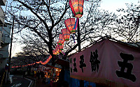 桜並木と出店